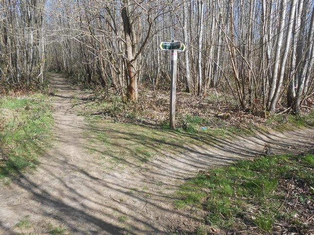 Footpath Junction, Oaken Wood