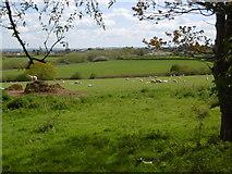 TQ4476 : Woodlands Farm by Marathon
