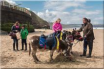 NZ8911 : Donkeys on West Beach, Whitby, Yorkshire by Christine Matthews