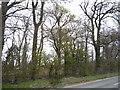 TG3212 : Woodbastwick Belt by JThomas