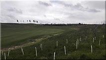 SU6154 : New Hedge on Edge of Weybrook Park Golf Club by James Emmans