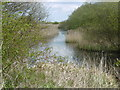 TR2261 : A dyke on Stodmarsh National Nature Reserve by Marathon