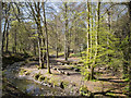 J4681 : Crawfordsburn Glen by Rossographer
