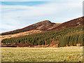 NH6324 : Forest below Carn Leachter by valenta