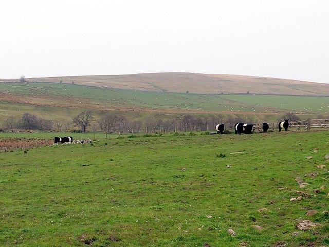 Farmland near Yearhaugh