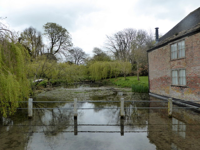Duck pond, Cerne Abbas