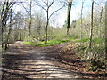SJ1962 : A fork in the track in Loggerheads Country Park by John S Turner