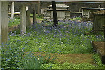 TQ3282 : View of bluebells in Bunhill Fields by Robert Lamb
