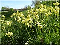 SO8942 : Cowslips by Philip Halling