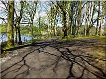 H5776 : Tree shadows, Loughmacrory by Kenneth  Allen