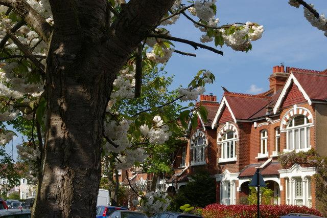 Tannsfield Road, Sydenham, in blossom season