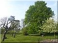 TF0733 : Millennium Orchard, Folkingham by Oliver Dixon