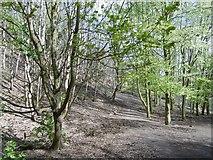 NT2570 : Path on Blackford Hill by Richard Webb