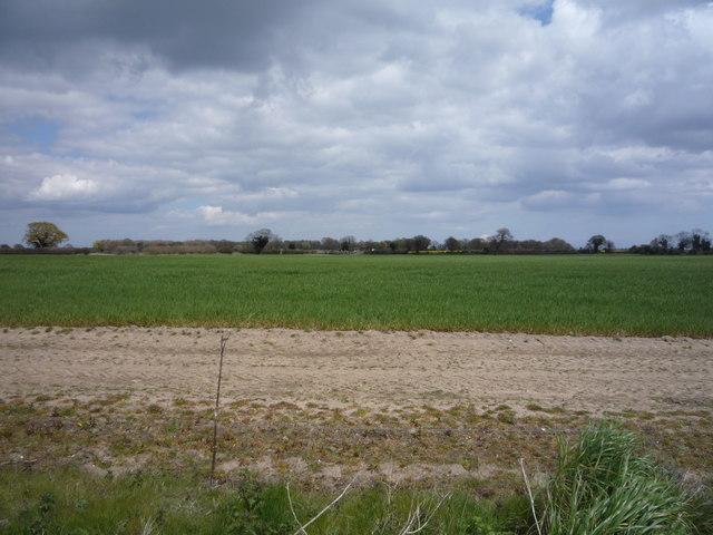 Crop field off Herringfleet Road