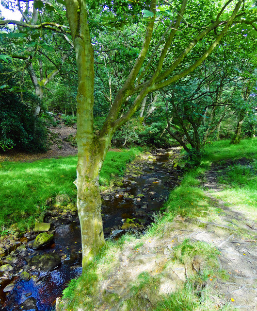 Tree Lined May Beck
