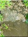 SP9198 : Bench mark, Coach Bridge, Seaton by Alan Murray-Rust