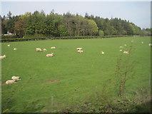 NU2024 : View from a Newcastle-Edinburgh train - farmland near Brunton by Nigel Thompson