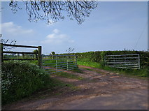 SS9907 : Farm track near Sunnyburrow farm by Rob Purvis