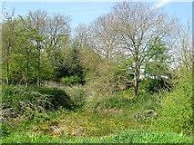 TQ1913 : Pond, Upper Wyckham Farm by Simon Carey