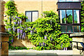 TL4459 : Wisteria at Honey Hill Mews by Tiger