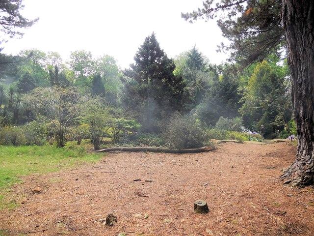 Trees by steam railway, Exbury Garden by Paul Gillett