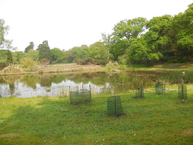 Pond by Steam railway, Exbury Gardens