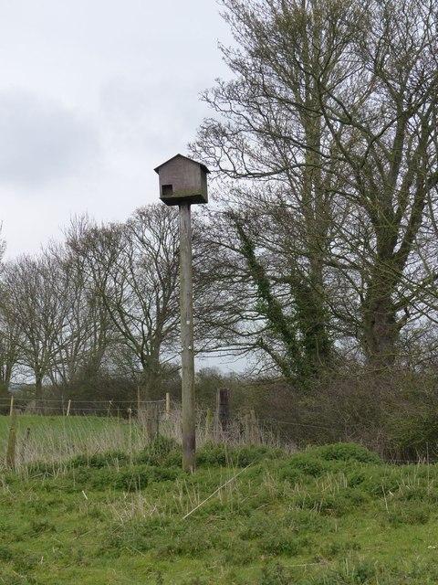 Owl box by Milton Brook