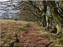 NS4177 : Edge of woods at Murroch Glen by Lairich Rig