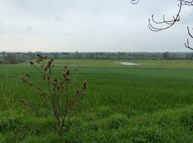Valley of Milton Brook