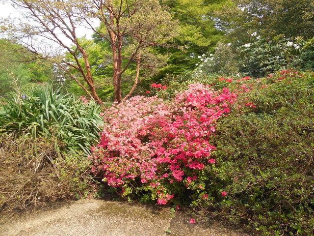 Exbury Gardens by Paul Gillett