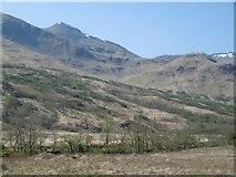 NN1435 : New woodland, Glen Kinglass by Richard Webb