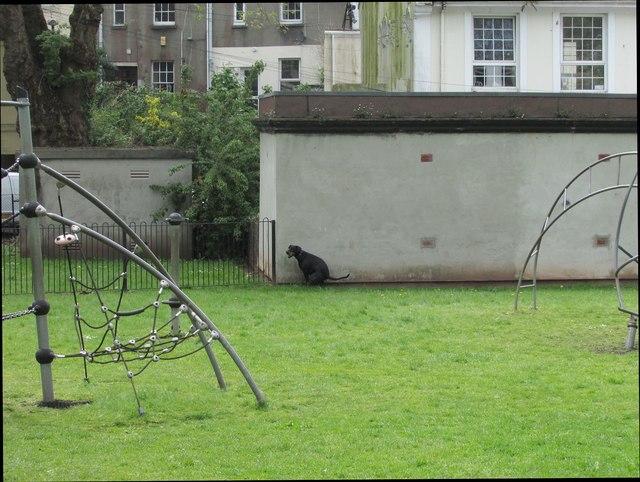 Dog defecating in children's playground, Upton Park