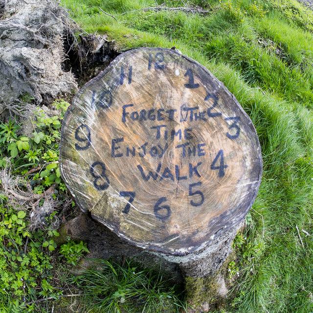 Tree stump, Cairn Wood