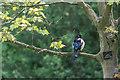 TQ3094 : Magpie, Grovelands Park, London N14 by Christine Matthews