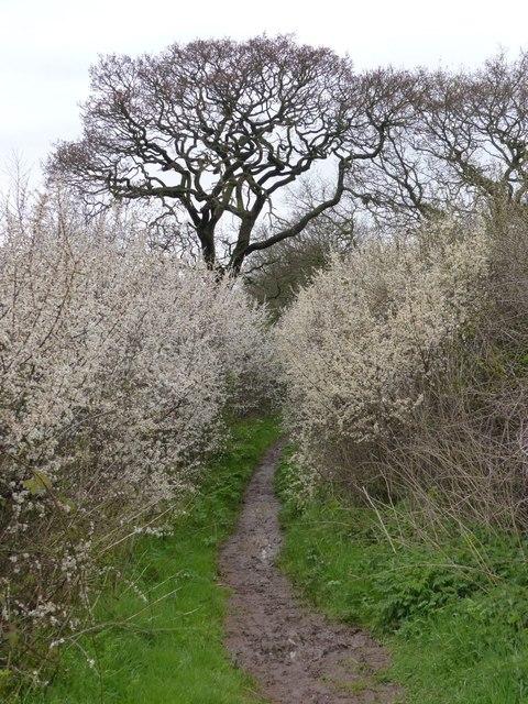 Ferma Lane near Ferma Wood
