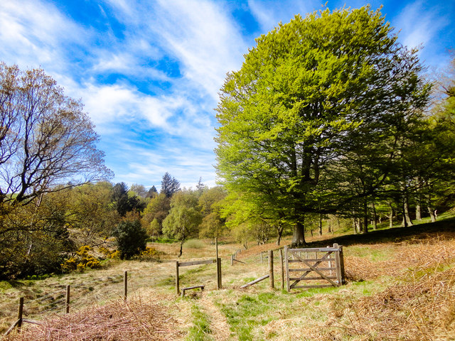 Ling Hill Plantation