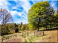 NZ9101 : Ling Hill Plantation by Scott Robinson
