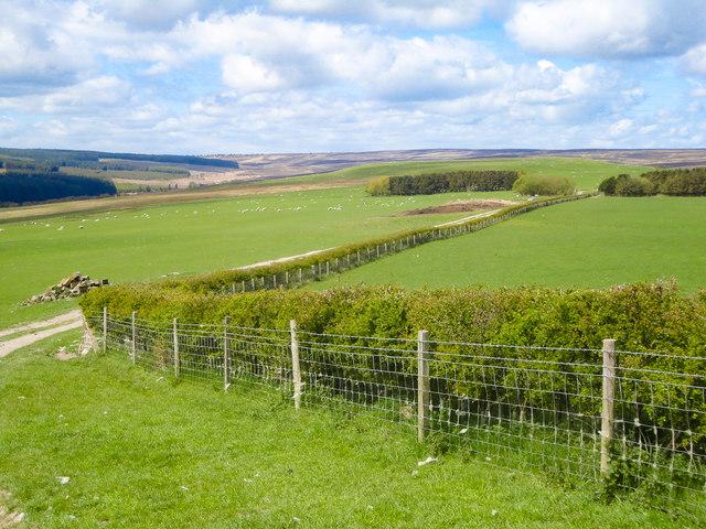 Lownorth Moor View