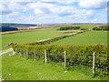 SE9397 : Lownorth Moor View by Scott Robinson
