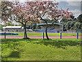 SJ8094 : Longford Park Athletics Stadium by David Dixon