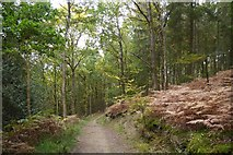 SO6115 : Path, Great Berry by Richard Webb