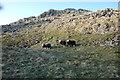 NY2306 : Herdwicks, Yeastygill Crags by Michael Graham