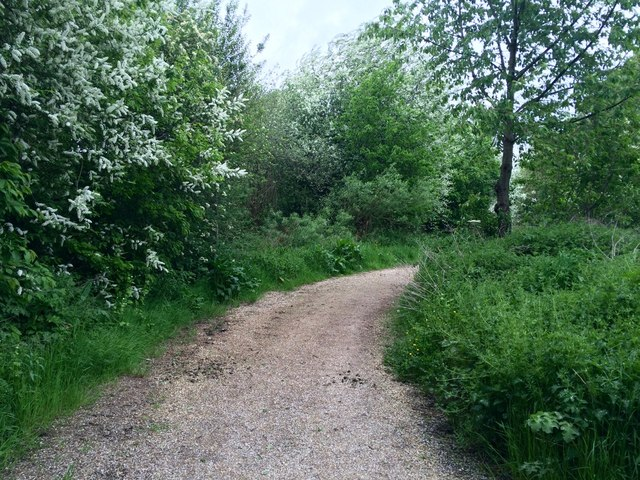 Path in Manor Farm nature reserve