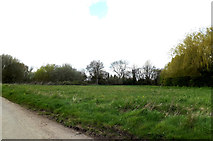 TM3887 : Tooks Common, Ilketshall St Andrew by Adrian Cable