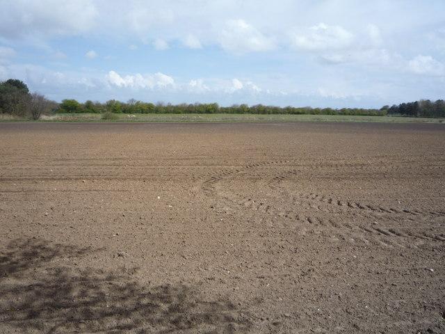 Field east of Happisburgh Road
