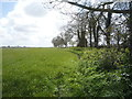 TG4027 : Crop field and mature hedgerow by JThomas