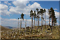 NN0966 : Isolated Trees passed by on the West Highland Way by Chris Heaton