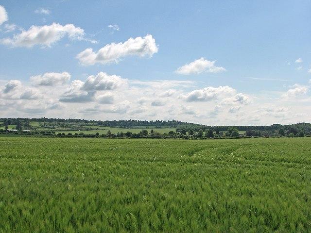 Barley on White Hill