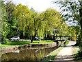 SJ9397 : Willow tree by Dukinfield Lift Bridge by Gerald England