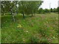TQ5873 : Wild flowers at Bluewater by Marathon